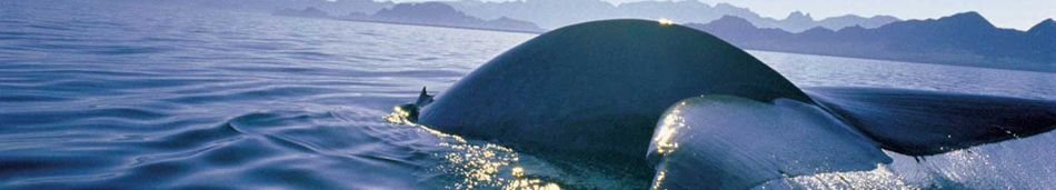 Cape Town Whale Watching Tours
