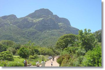 The Kirstenbosch Botanical Gardens