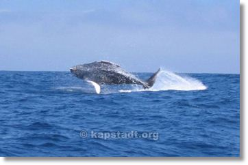 Knysna Whale Watching